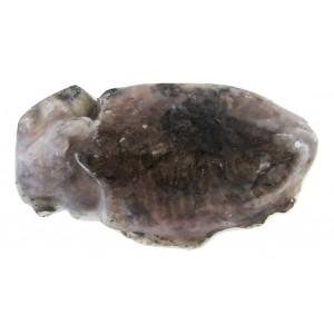 Σουπιά Ολόκληρη Ακαθάριστη 300/500 Αιγαίου 15% Επίπαγος (5 Kg κιβώτιο)